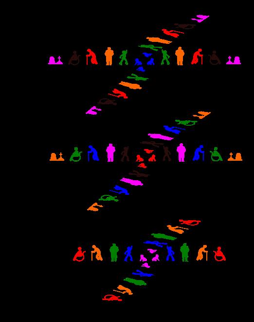 Cycle de vie humain